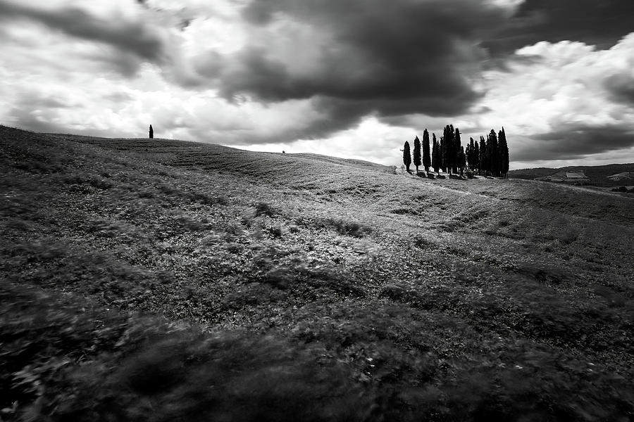 Cypress Trees Photograph - Cypress trees by Andrei Dima