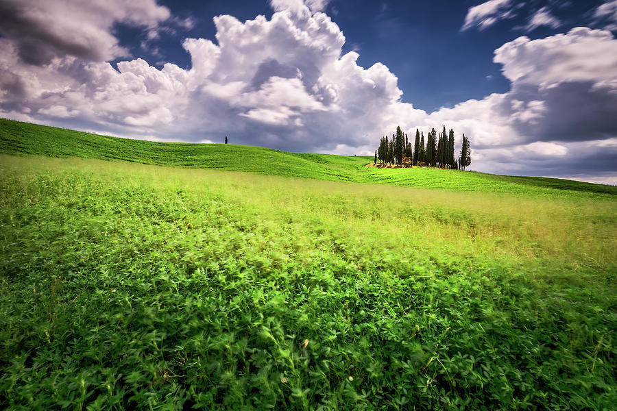 Cypress Trees Photograph - Cypress trees in Tuscany by Andrei Dima