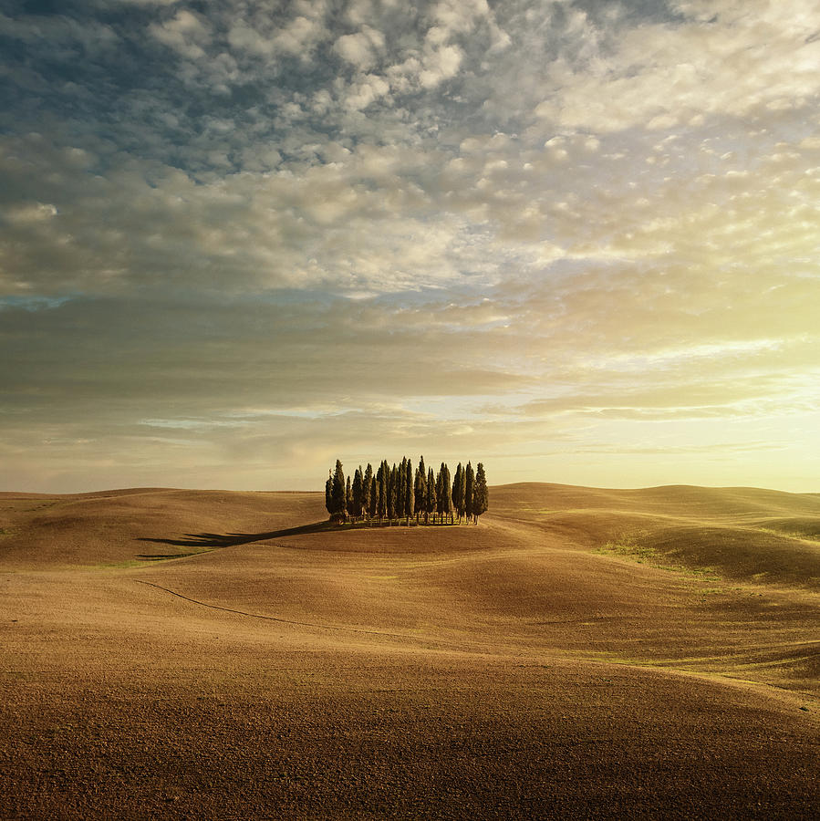 Cypress Trees In Tuscany Photograph by Peter Zelei Images