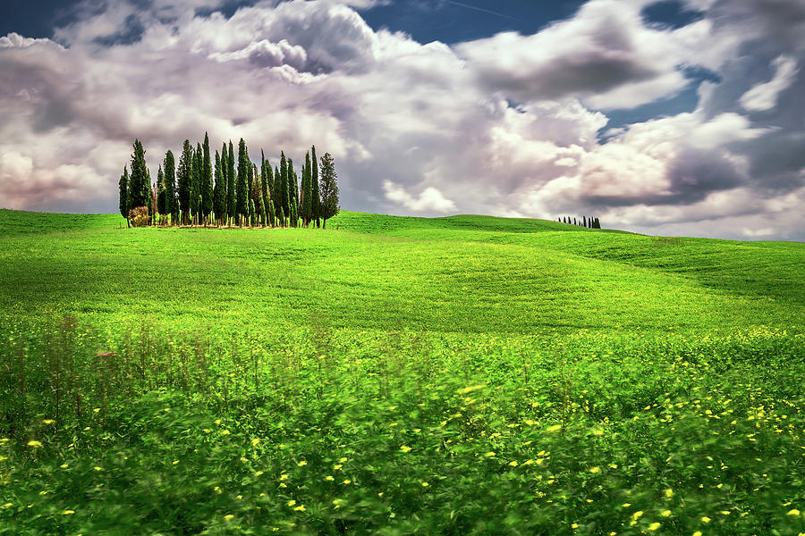 Cypress Trees Photograph - Cypress trees on a field by Andrei Dima