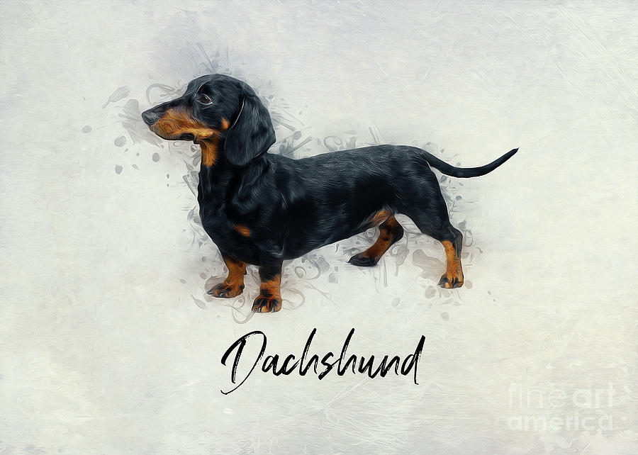 Dachshund  by Ian Mitchell