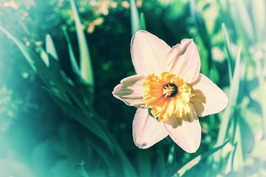 Daffodil Digital Art I by Marianne Campolongo