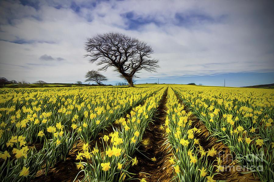 Daffodil Field by Ian Mitchell