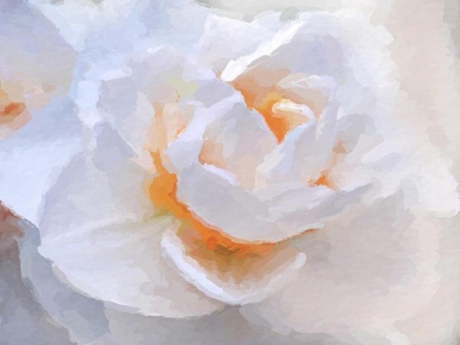 Daffodil inspiration by ANTHONY FISHBURNE