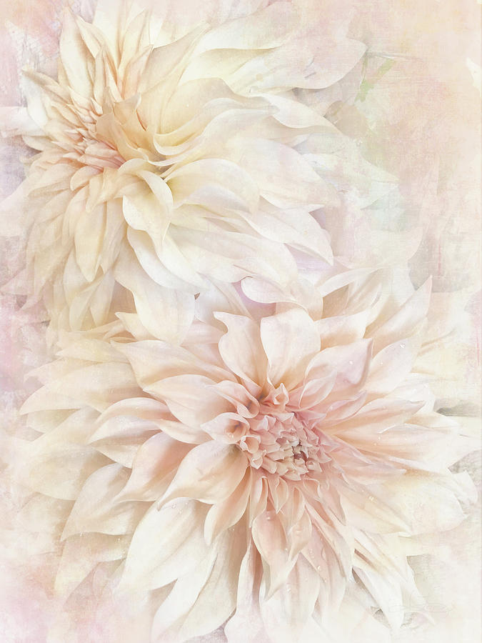 Dahlia Beauties 2 by Jill Love