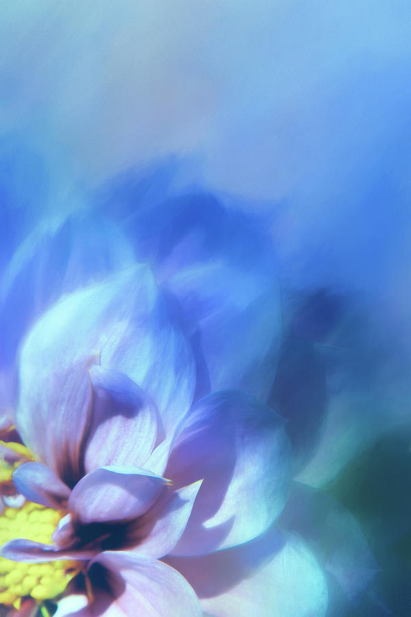 Dahlia on Blue by Terry Davis