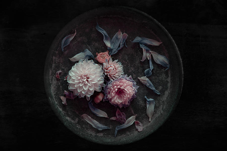 Flowers Photograph - Dahlia On Their Last by Inge Schuster