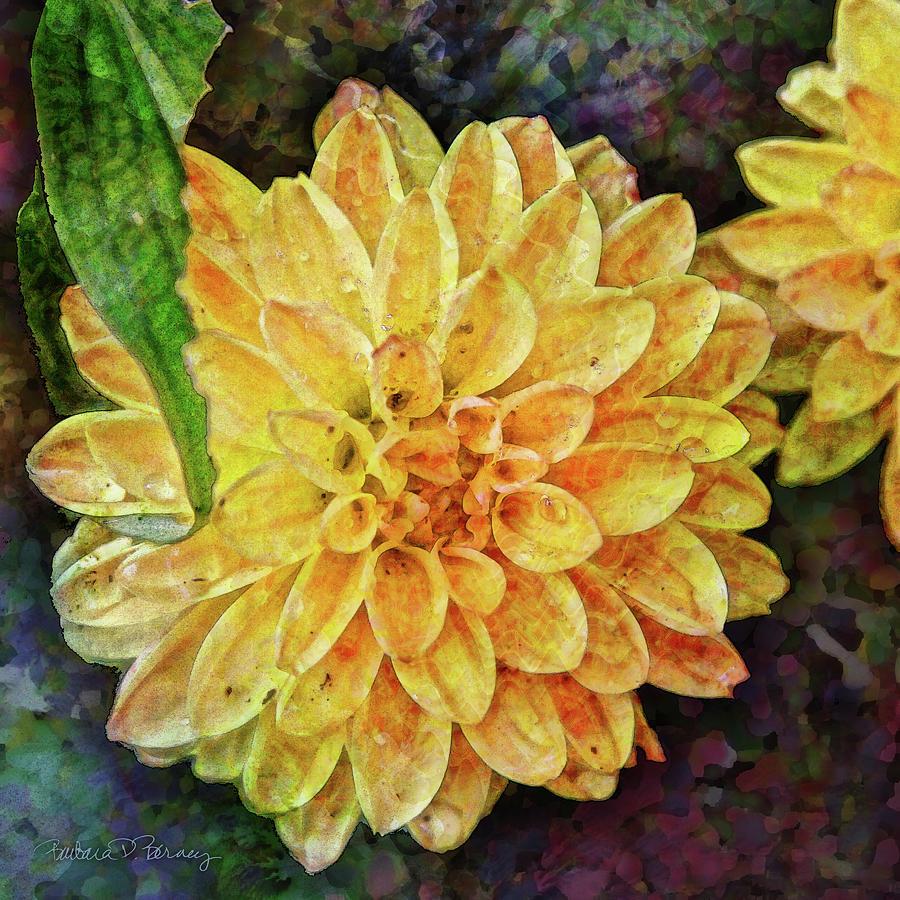 Dahlia with Raindrops by Barbara Berney
