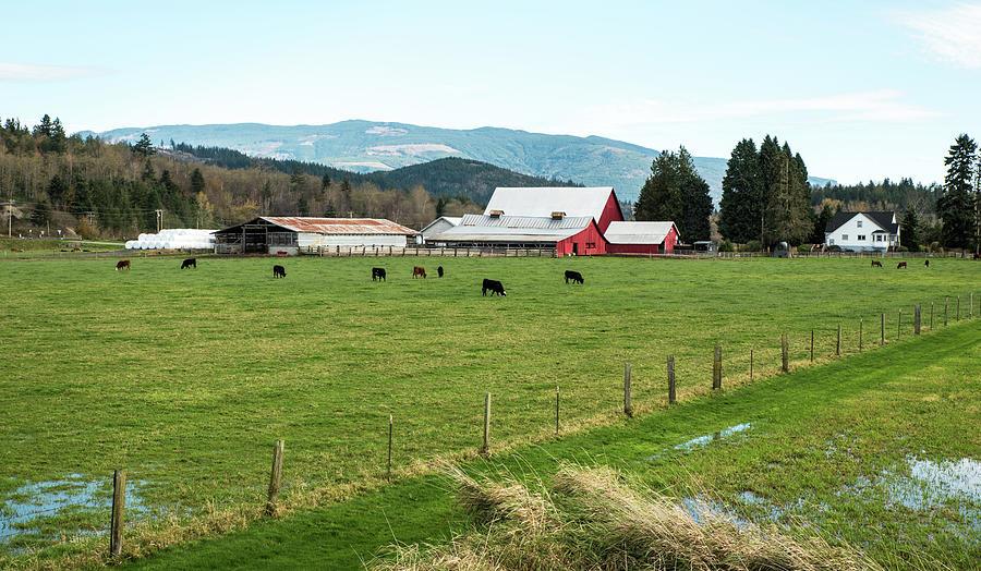 Dairy Farm on Old 99 by Tom Cochran