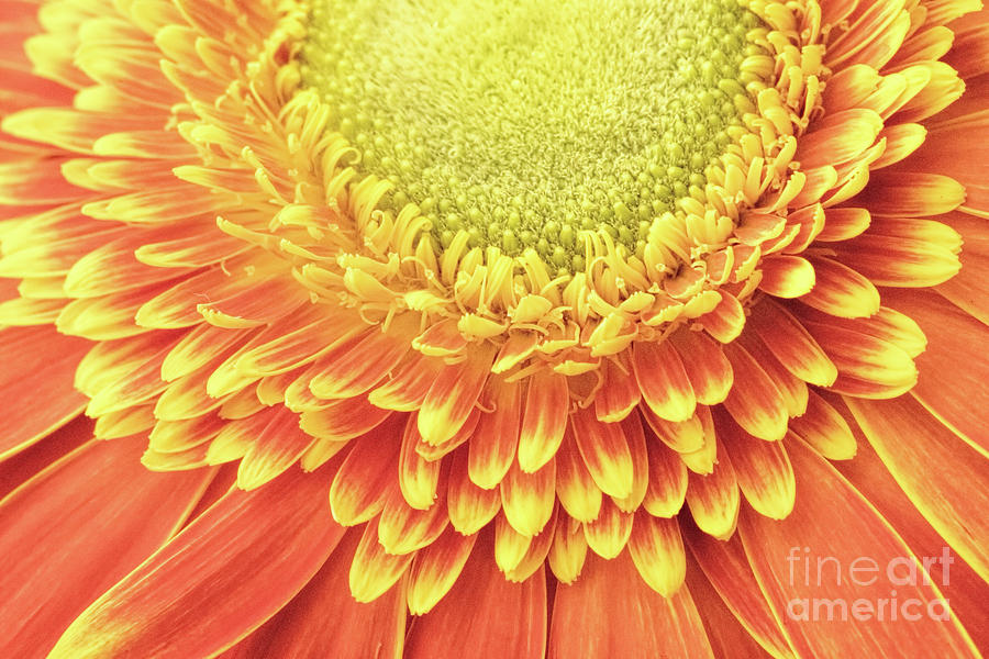 Abstracts Photograph - Daisy Day by Marilyn Cornwell