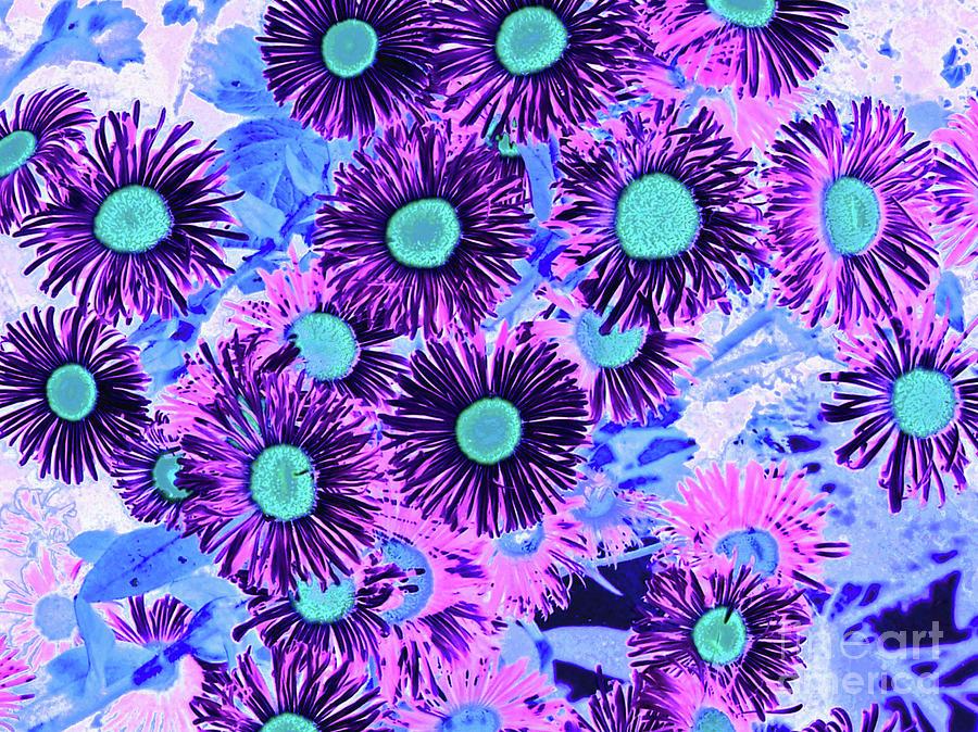 Daisy Flowers  by Cveti Dinkova