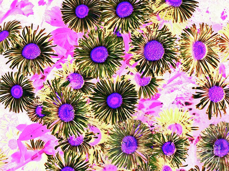 Daisy Flowers Dark by Cveti Dinkova