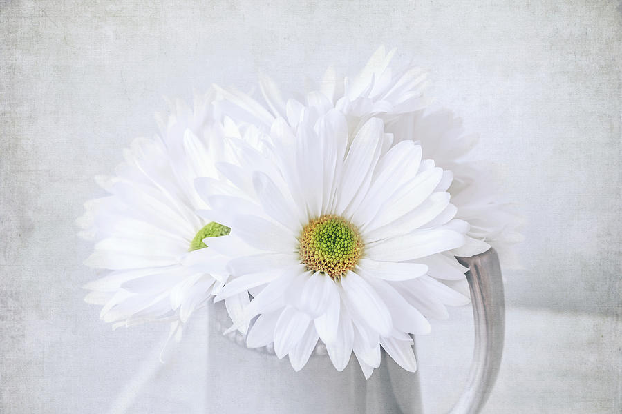Daisy Flowers by Kim Hojnacki