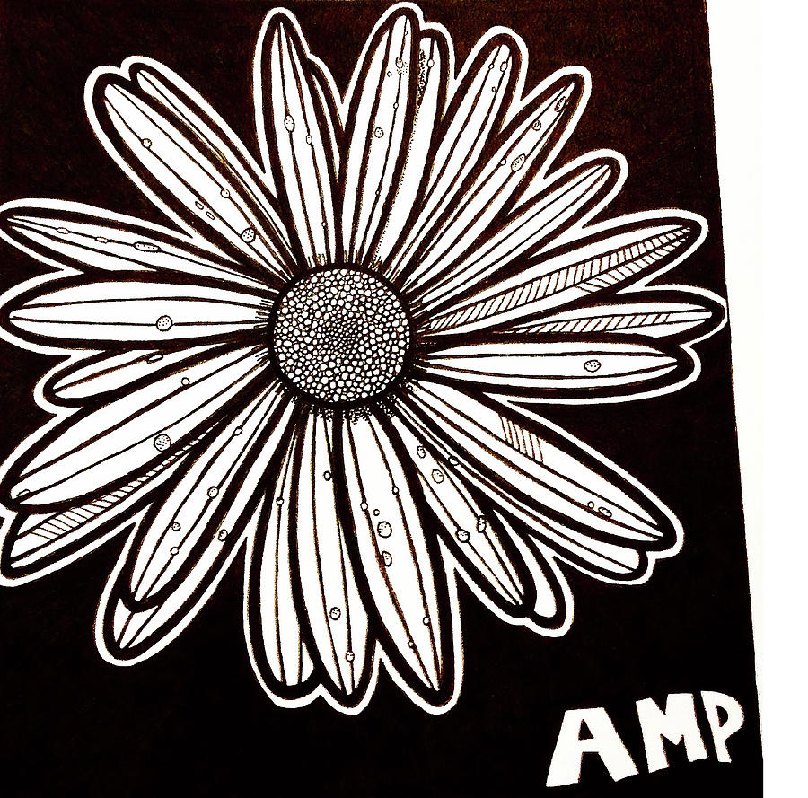 Daisy Drawing - Daisy Sketch by Anne Marie Price