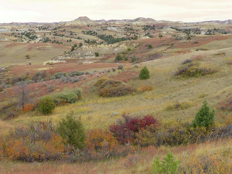 North Dakota Photograph - Dakota West Prairie Treasure by Cris Fulton