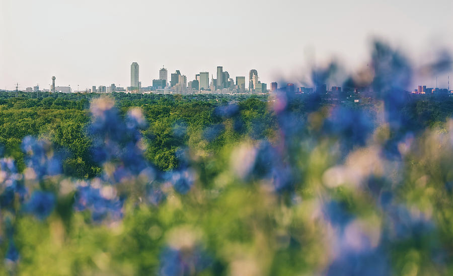 Dallas County Bluebonnets by Peter Hull