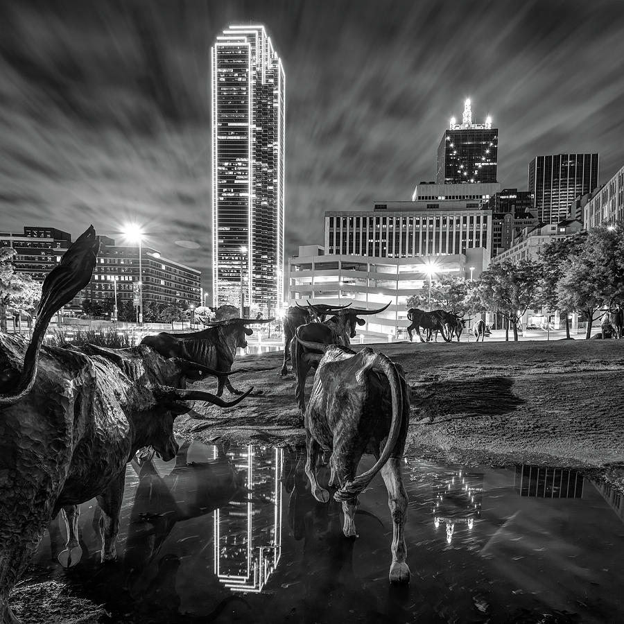 Dallas skyline and texas longhorn cattle drive sculptures black and white by gregory ballos