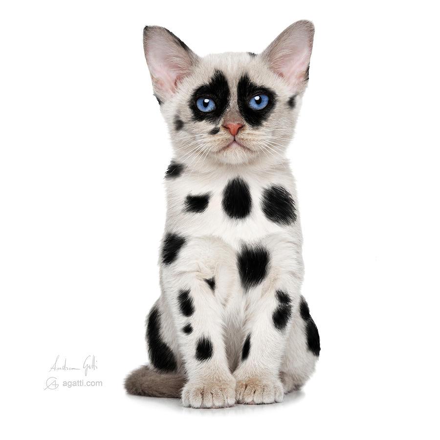 Pes - Stránka 2 Dalmatian-cat-andrea-gatti