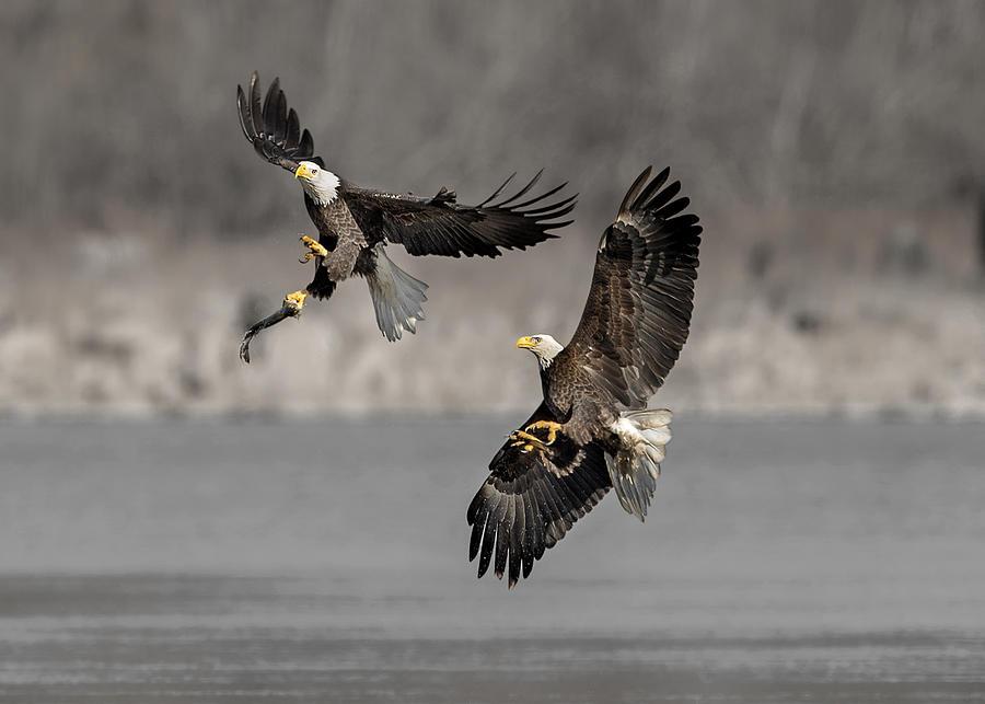 Wild Photograph - Dance In The Air by Rob Li