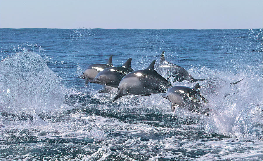 Dancing Dolphins by Cheryl Strahl