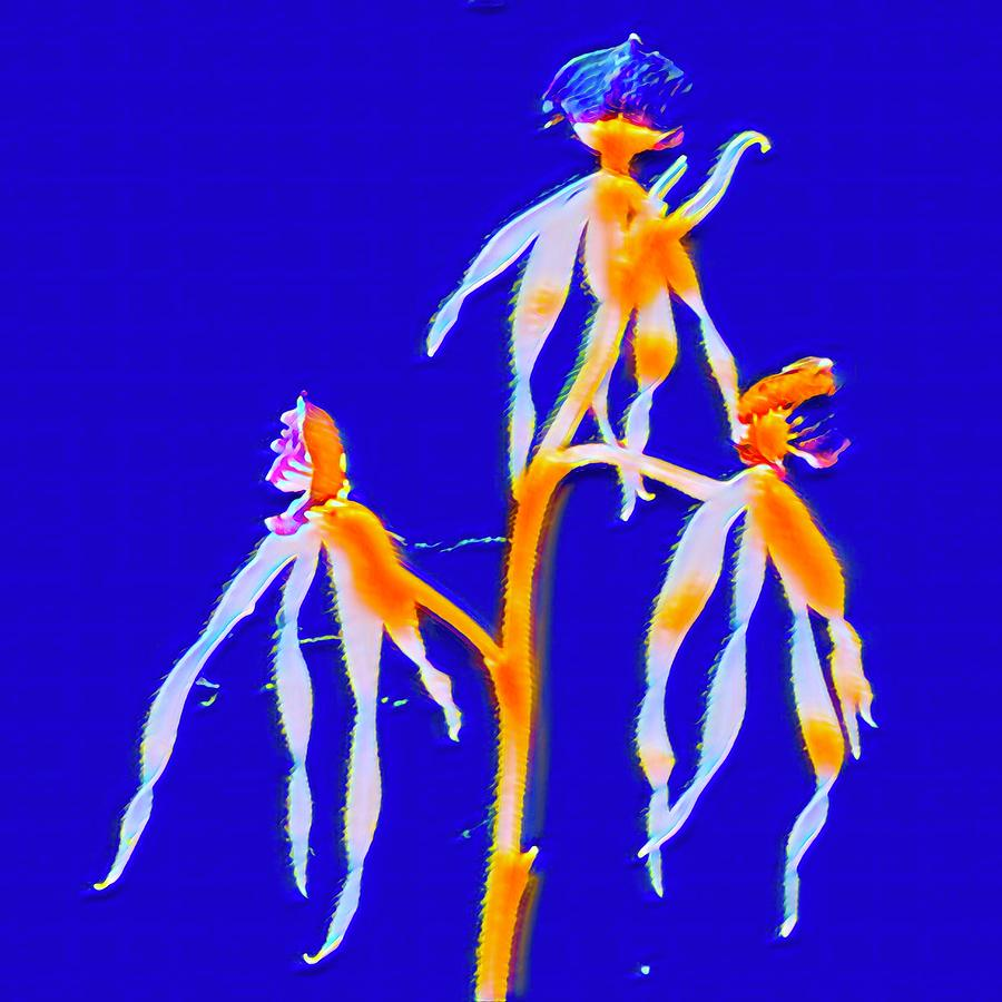 Dancing Orchids in Blue Aloha  by Joalene Young