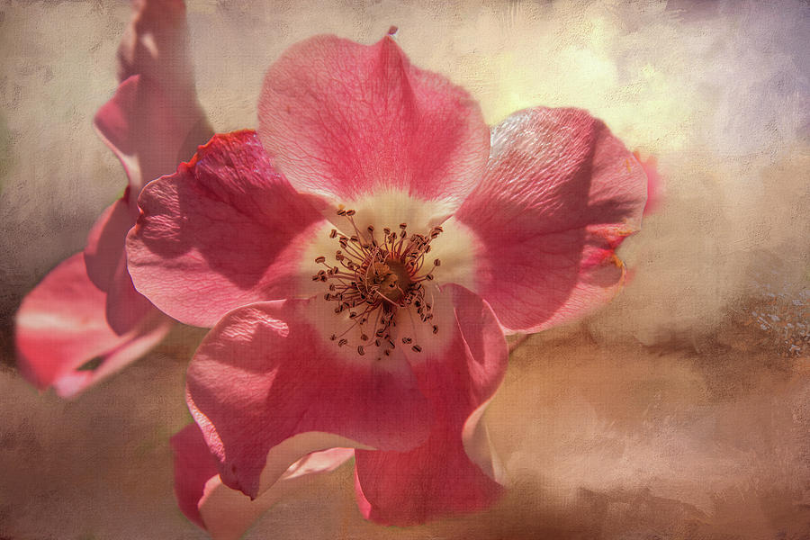 Texture Digital Art - Dancing Rose Beauty by Terry Davis