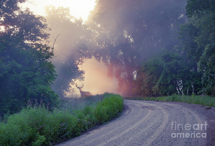 Dandy Dawn by Michael Greiner