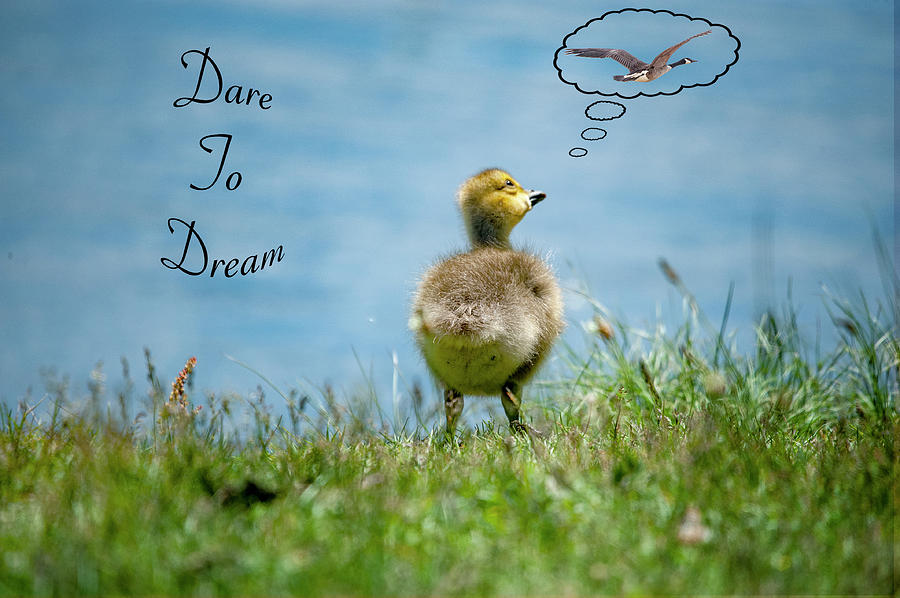 Dare To Dream by Cathy Kovarik