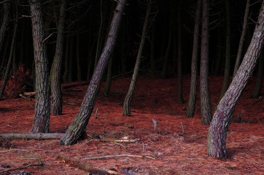 Dark Forest 1 Photograph by Flashworks