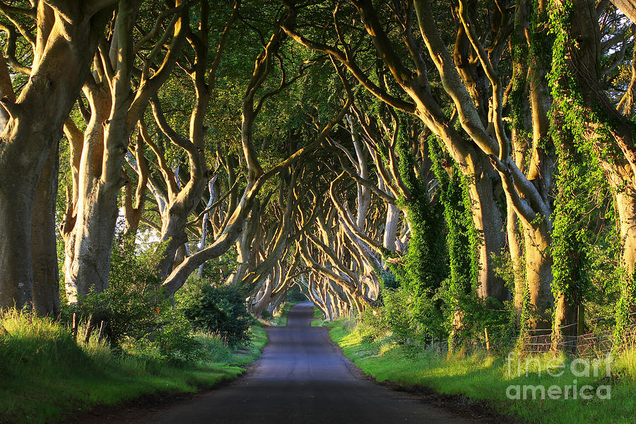 Sunrise Photograph - Dark Hedges Vi by Adrian Pluskota