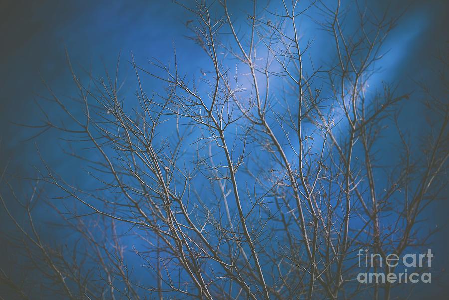 Dark Winter by DHEERAJ MUTHA