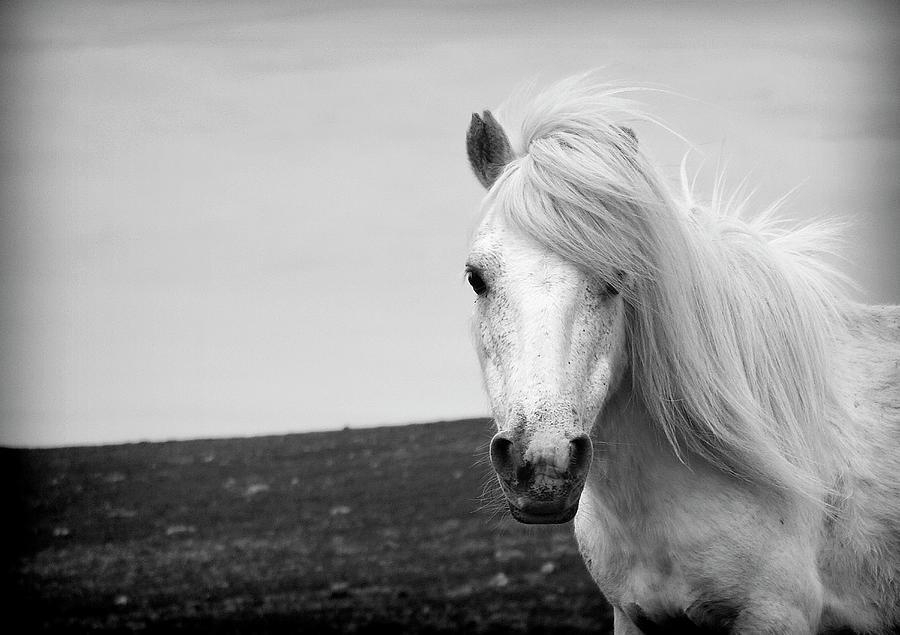 Dartmoor Pony Photograph by Adam Hirons Photography