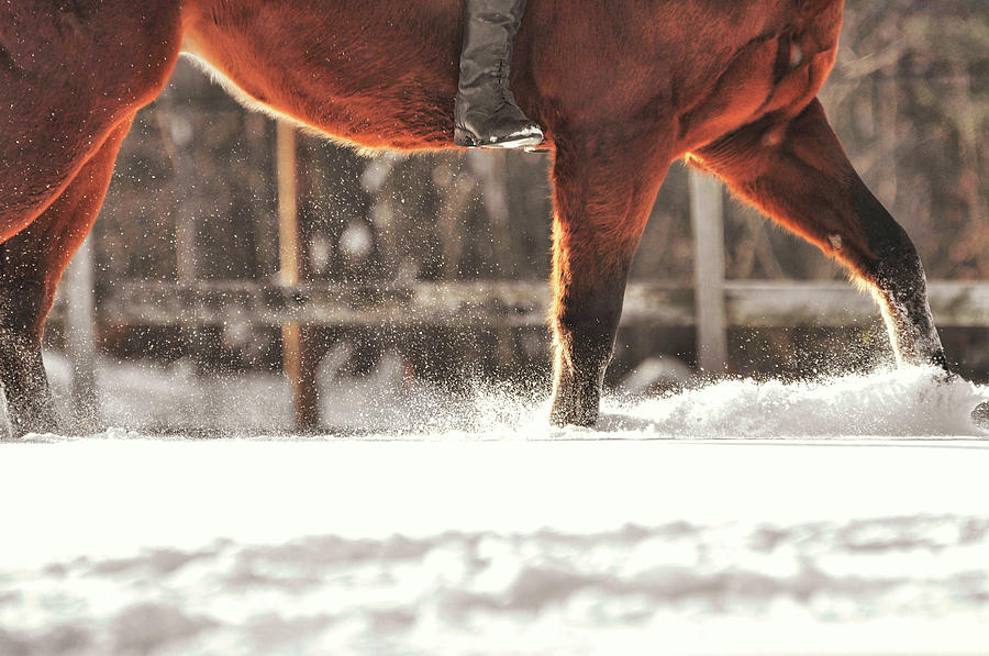 Horse Photograph - Dashing Through The Snow by JAMART Photography