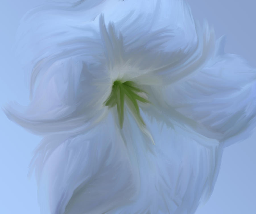 Datura Study in White by Jonathan Thompson