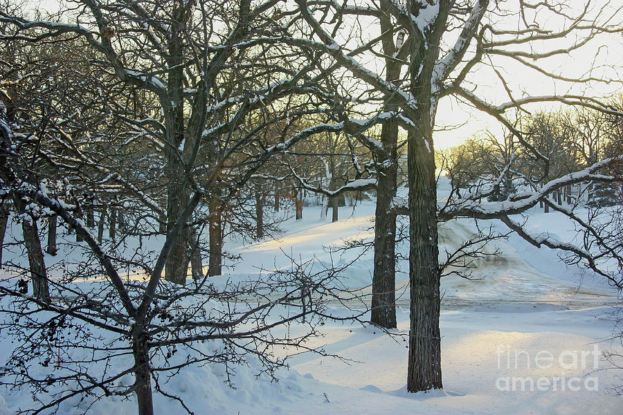 Dawn on a Snow-Covered Landscape by Kevin McCarthy