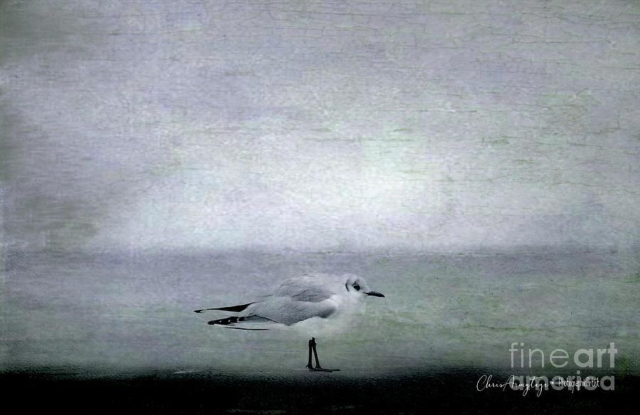 Dawn on the Coast by Chris Armytage