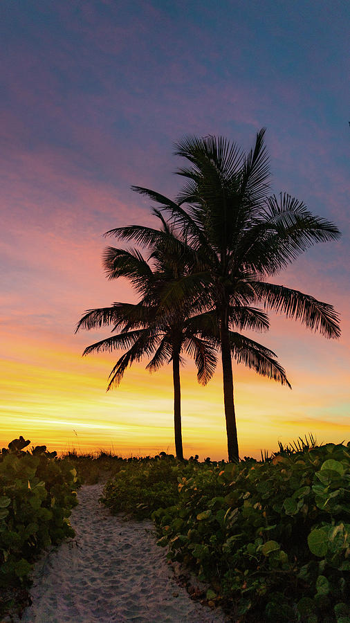 Dawn Palms Delray Beach Florida by Lawrence S Richardson Jr