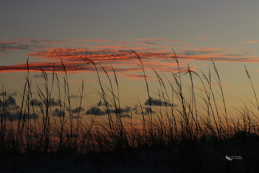 Dawn Through Sea Oats by Denise Winship