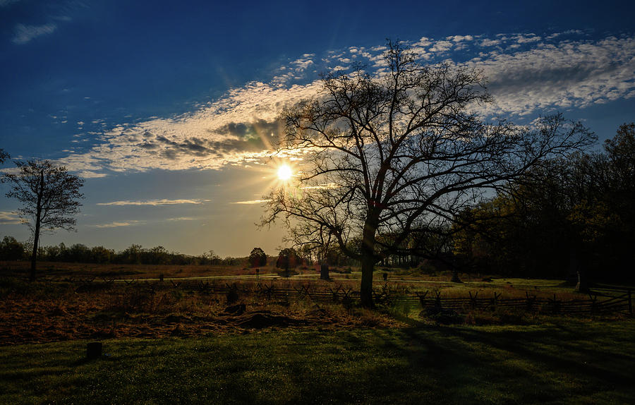 Dawn thru the tree by Dan Urban