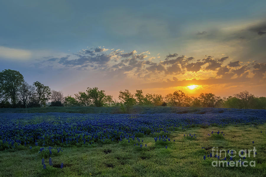 Daybreak In The Land Of Bluebonnets by Mark Alder
