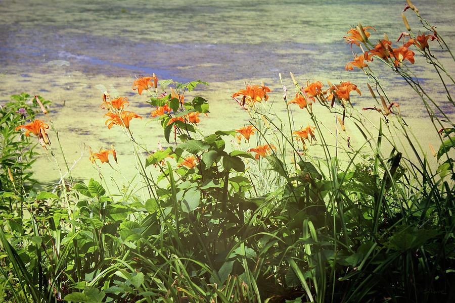 Daylily Dreams 2 by Shawna Rowe