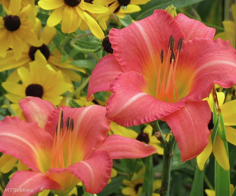 Daylily Pair with Rudbeckia by MTBobbins Photography