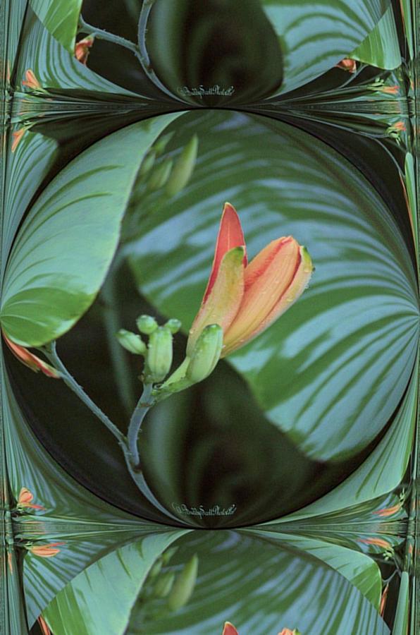 Daylily twist by Buddy Scott