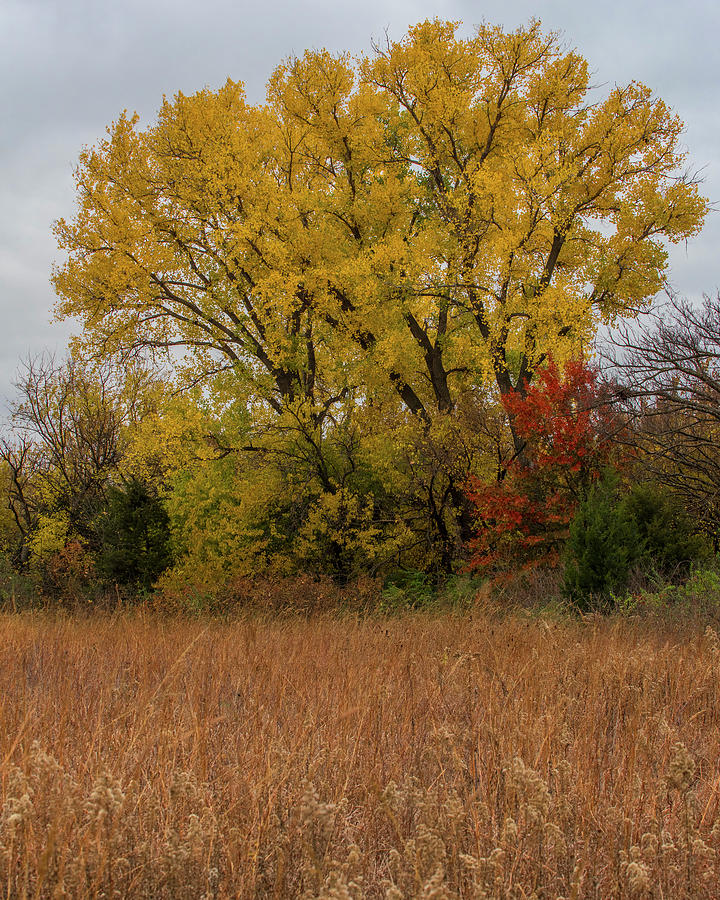 DDP DJD Autumn Prairie Woodland 4453 by David Drew