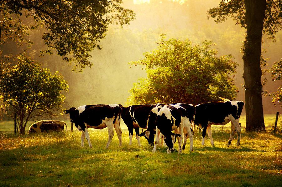 De-light-ed Calves Photograph by Bob Van Den Berg Photography