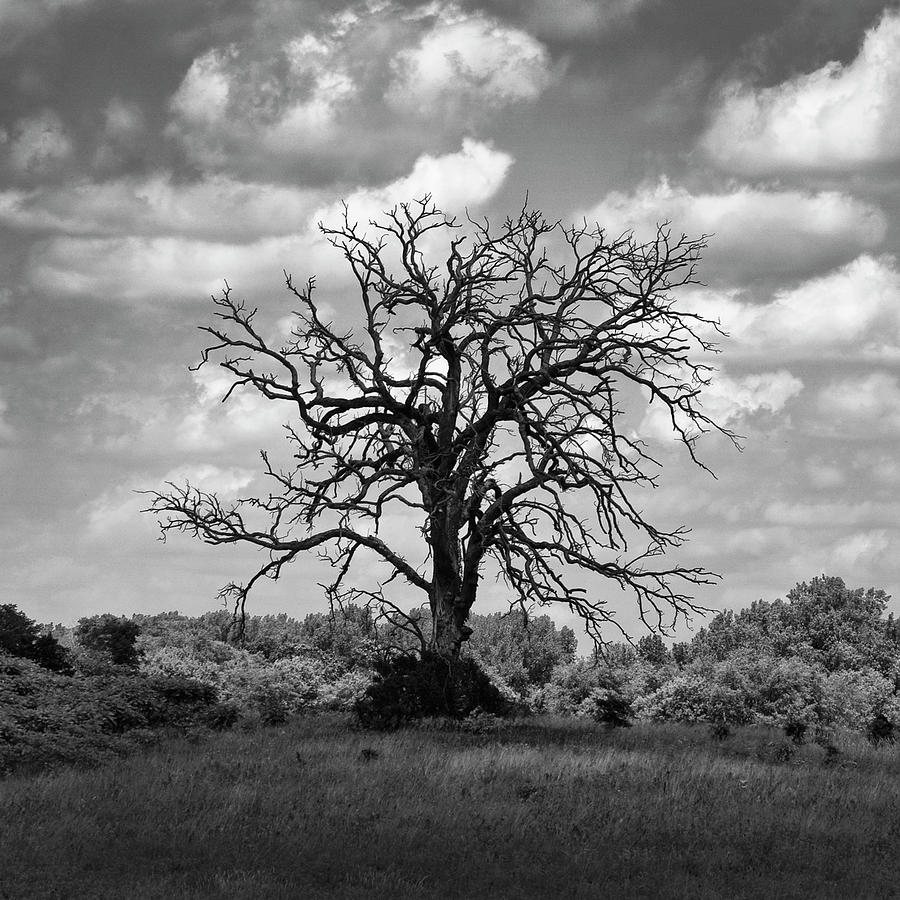Dead Cottonwood Tree in a Cloud Shadow by Keith Dotson