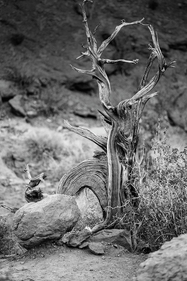Dead Tree in the Desert Southwest by Keith Dotson