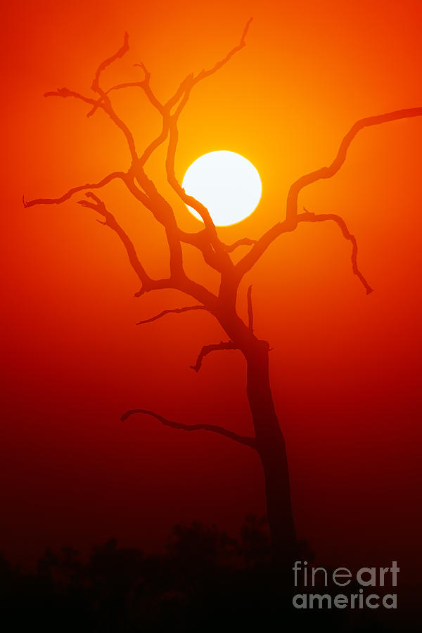 Sunrise Photograph - Dead Tree Silhouette With Dusty Sunset by Johan Swanepoel