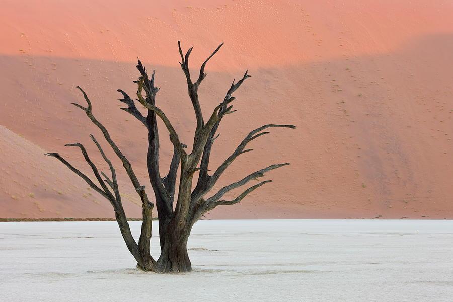 Dead Vlei Sossusvlei Africa Namibia Photograph by Thorsten Milse / Robertharding