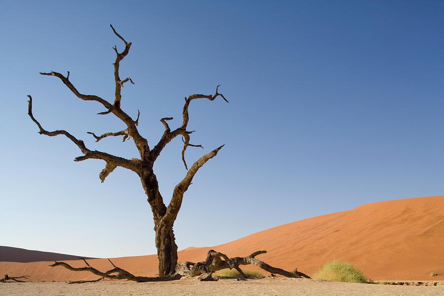 Dead Vlei, Sossusvlei, Namibia Photograph by Paul Souders